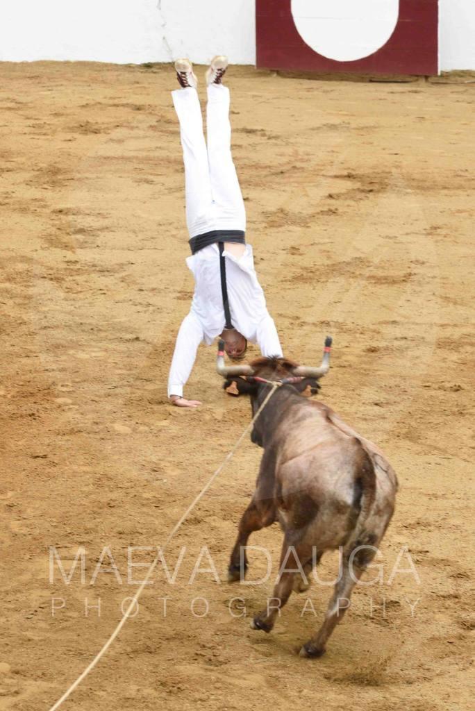 Louis Ansolabéhère dans sa rondade flip devant la vache de l'avenir.